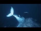 Красивые и загадочные киты (360p).mp4
