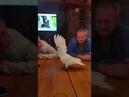 Попугай танцует под Деспасито ржака всем смотреть