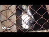 Новости Перми: остров собачьих надежд
