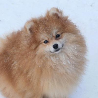 Royal Canin Obesity Management консервы для собак с