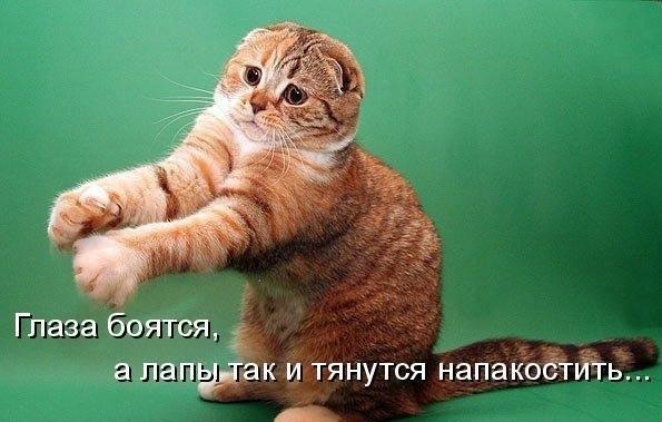 Смешные милые умные животные