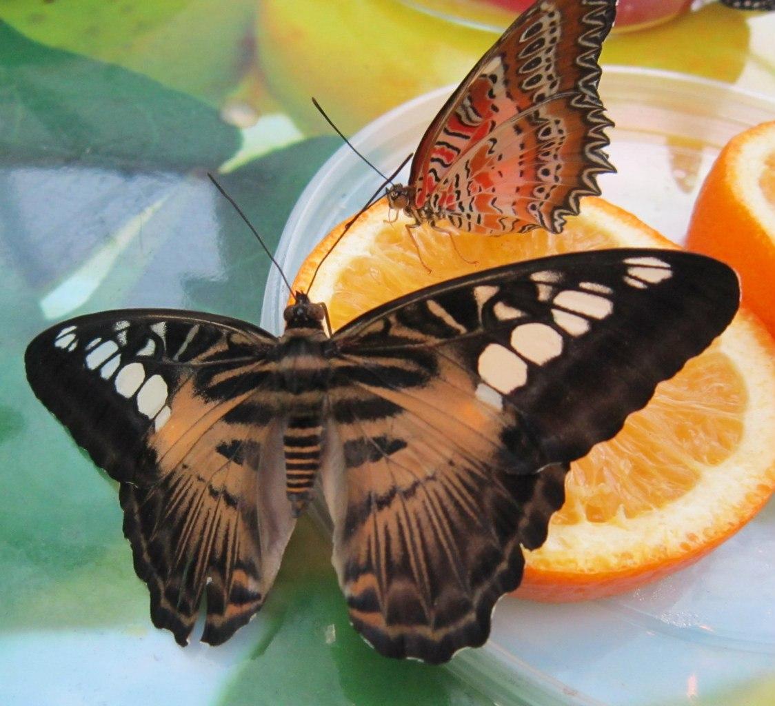 Открытки с живыми бабочками в Украине. Сравнить цены, купить 53