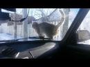 кот реваншист проучил водителя