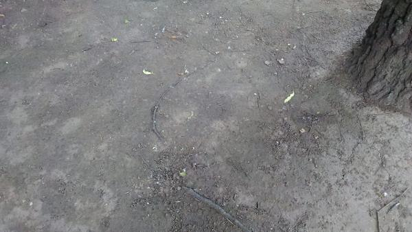 Детская площадка на Новгородской вновь стала безопасной для игр