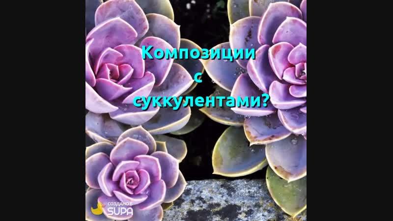 С какими растениями Вы предпочитаете флорариумы?