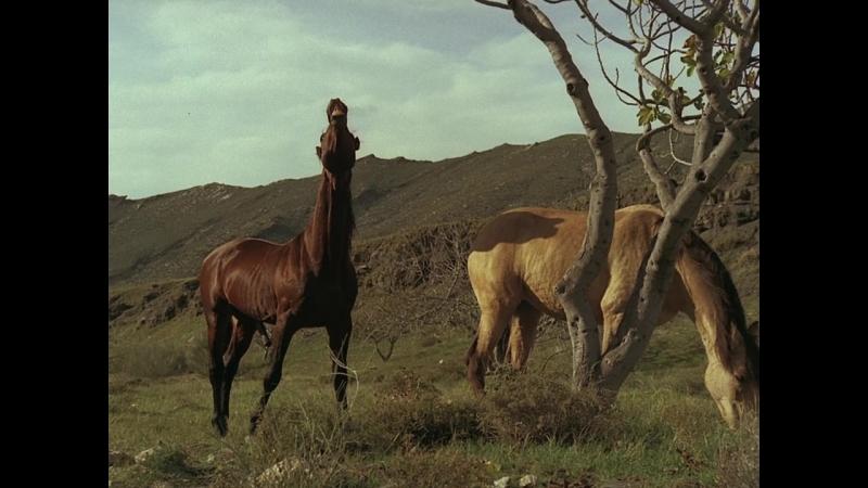 Кони Вальдеса / Valdez, il mezzosangue (1973)
