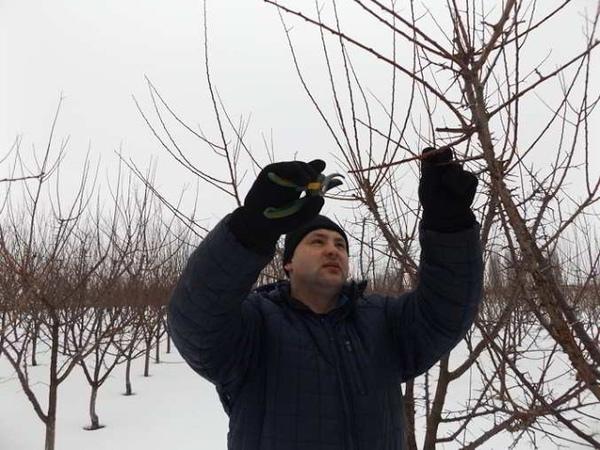 Майстер клас по зимовій обрізці дерев в саду СТОВ Агросвіт с Карапиші