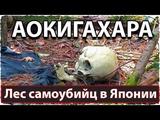 Аокигахара - лес самоубийц в Японии | Aokigahara - Suicide Forest in Japan