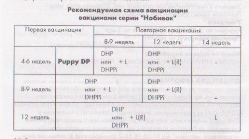 Схема вакцинации щенка нобивак