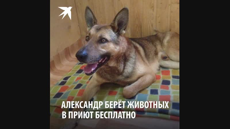 Петербуржец продал квартиру в городе чтобы построить приют для бездомных собак