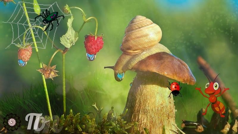 Муравьишка познаёт мир . Видео для маленьких детей.