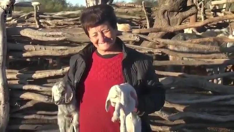 Рождение демонического козла напугало жителей деревни в Аргентине