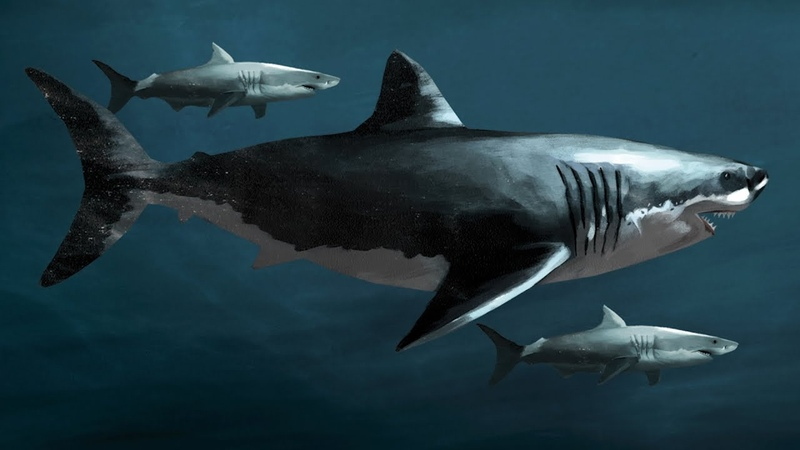 Know Your Ancient Sharks! Megalodon Fact And Fiction | SHARK WEEK