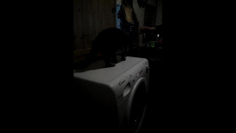 Василиса, испугалась стиральную машинку!😄
