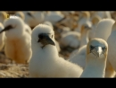 Планета птиц (2018) (Planet of the Birds)