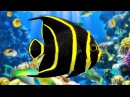 Coral Reef Aquarium The Best Relax Music 2 Hours Sleep Music HD 1080P