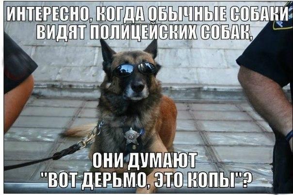 Служебные собаки - Страница 2 MsLGkQ6RBxA