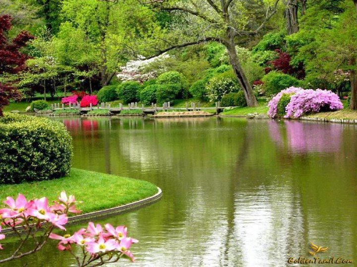 Spring time ... - Pagina 2 WLr1NApR9ZU