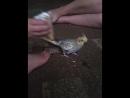 Кира кушает мороженое