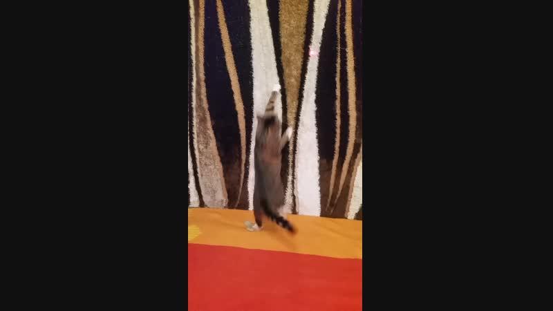 11.12.18-Кто-то летает на ковре, а мы-по ковру! :-)