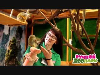 Наша дружная семья обезьянок_