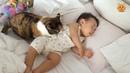 Кошки Защищают Детей - Кошки Любят Малышей - Самый Смешной Фильм Кота 2017 84