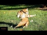 Смешное видео про весёлых котов и кошек!Забывные животные!Прикольная подборка с...