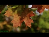 v-s.mobiKorg Style D Zinovich - Равнодушная осень.mp4