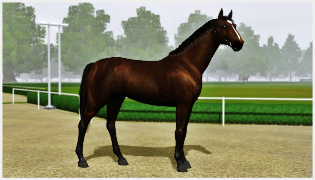 Регистрация лошадей в RHF 1.2 - Страница 2 IL8Levd7SaE