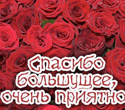 http://cs618522.vk.me/v618522150/b787/wezIO0V43QQ.jpg