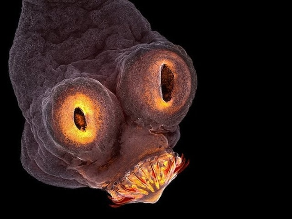 Мир под микроскопом Невидимая Вселенная Фантастический микромир The world under a microscope