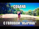СОБАКА с ГОЛОВОЙ НЫРЯКА   The DOG DIVES for the ball (in slow motion video recording ! ! !) 1