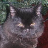 Мои-Любимые-Животные Кошки, 2 августа , Ейск, id201264809