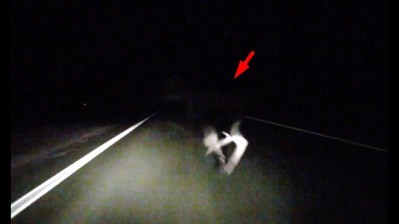 Водитель избежал столкновения с лосем, отделавшись царапинами на авто