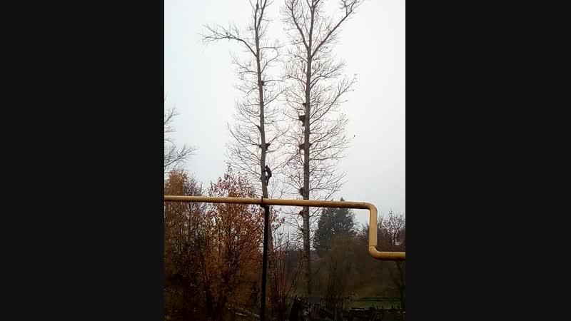 Леонид спил дерева любой сложности 89278551346