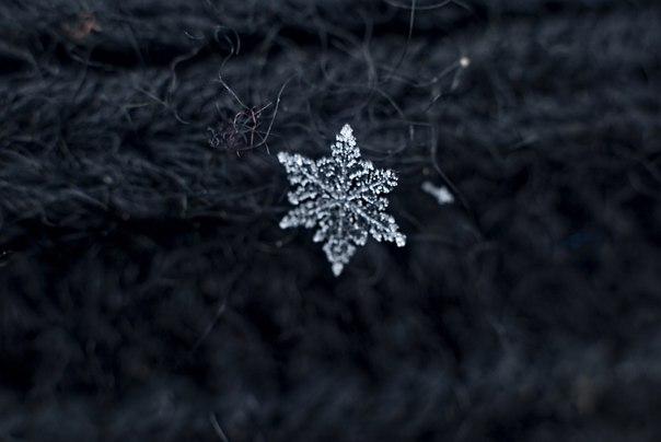 Снежинки  на Гелиос-81Н
