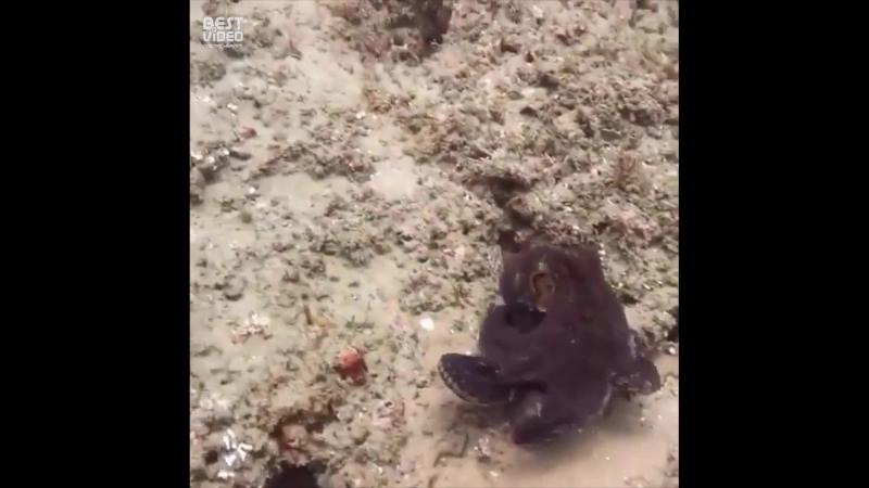 Осьминоги крутые