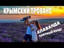 Где ЛАВАНДА Крымский прованс