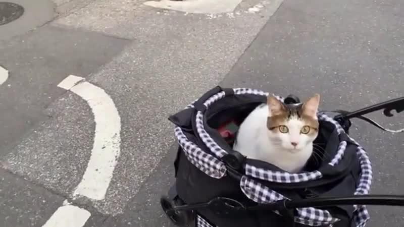 Японский котик в коляске и дед Kawaii Alina Rin in Japan