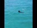 Дельфин и Собака