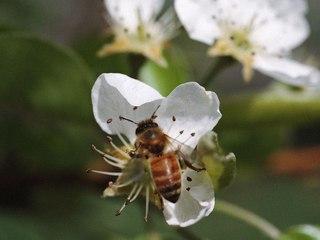 Pis Kimyasallar Arıları Yok Ediyor Yediğimiz Pek Çok Besinin Üretimi Tehlikede