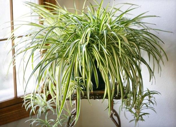 9 комнатных растений, которые отлично чистят воздух: ↪ И просты в уходе!
