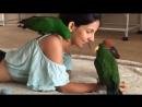 Девушка и попугаи удивительное видео
