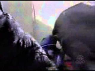 Слон присел, и голова скрылась в ...лучшие видео и смешные приколы
