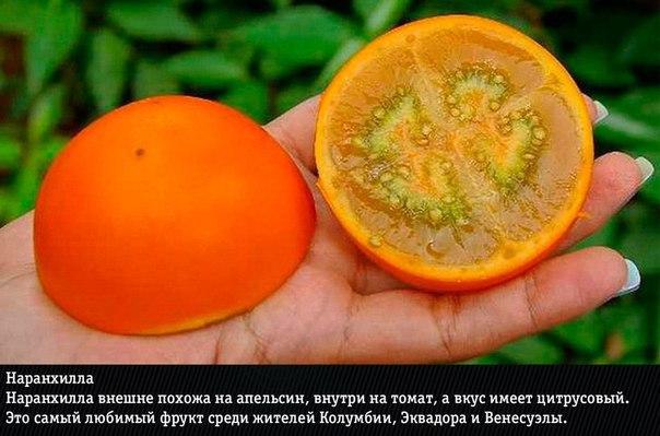 10 самых экзотических фруктов: фото и названия Нас уже не удивишь маракуйей, дурианом и личи. Сегодня мы узнаем о действительно редких экзотических фруктах, которые вы вряд ли пробовали хоть раз