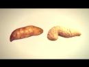 Овощи и фрукты, похожие на органы человека.