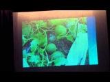 Будьте здоровы - о проростках, бездрожжевом хлебе. Выращивание арбузов и дынь.