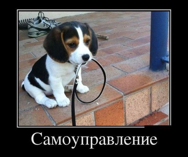 http://cs543108.vk.me/v543108056/12a17/wvLIbqy34J0.jpg