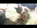 Кот Вася поедает дичь