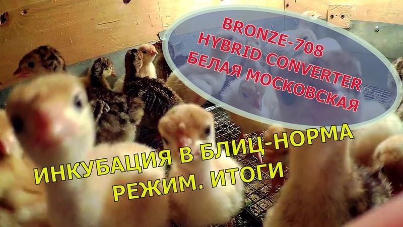 Инкубация индюшиных яиц в Блиц Норма Режим Итоги Мое хозяйство